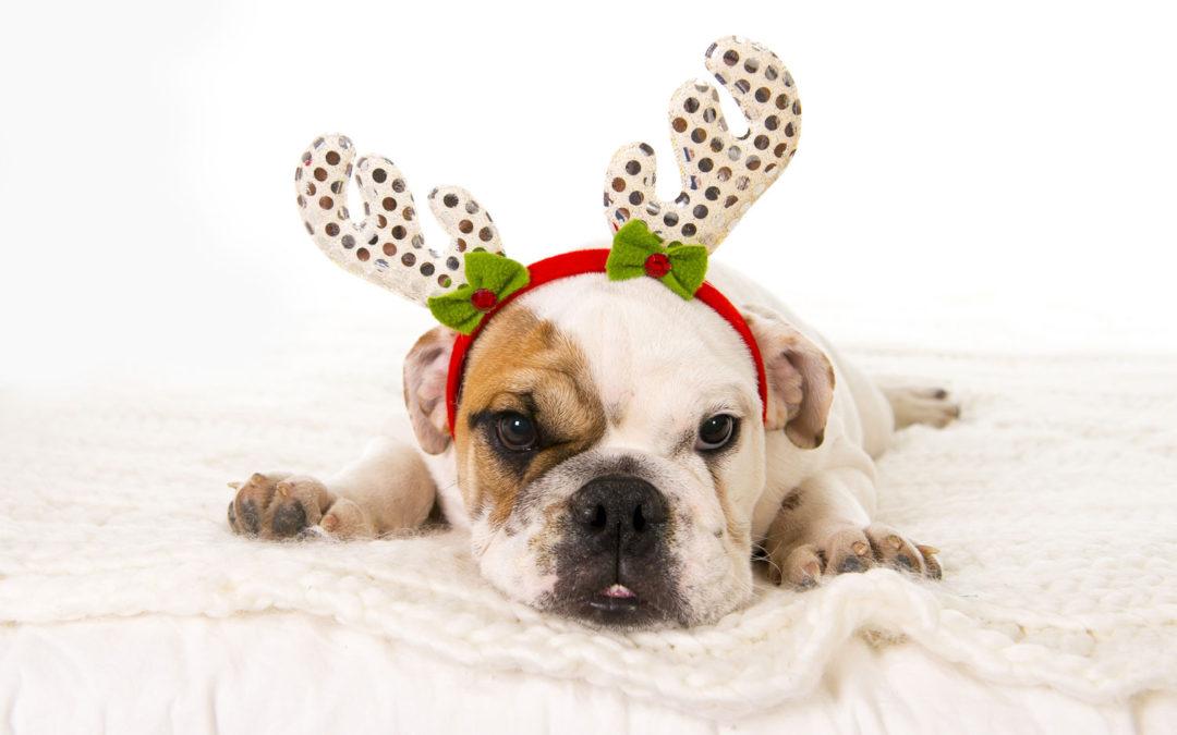 Handling Holiday Stress Guide